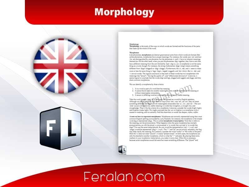 دانلود مقاله Morphology 2